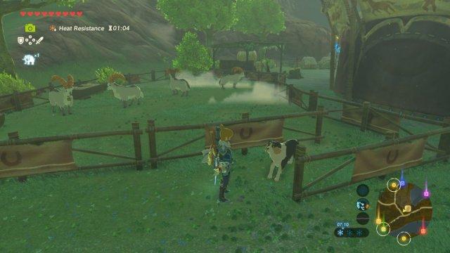 A horse.jpg